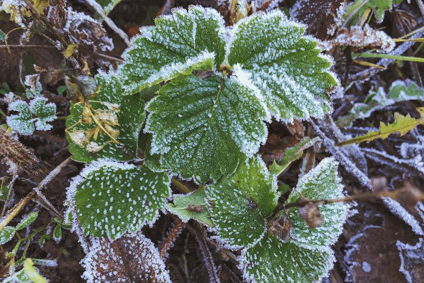 beerenobst-winter