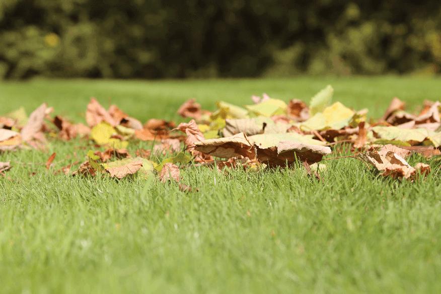 Laub, das sich im Herbst auf Ihrem Rasen sammelt, kann an einer Stelle im Garten gesammelt werden und bietet dort einen Unterschlupf für Kleinlebewesen wie Igel.
