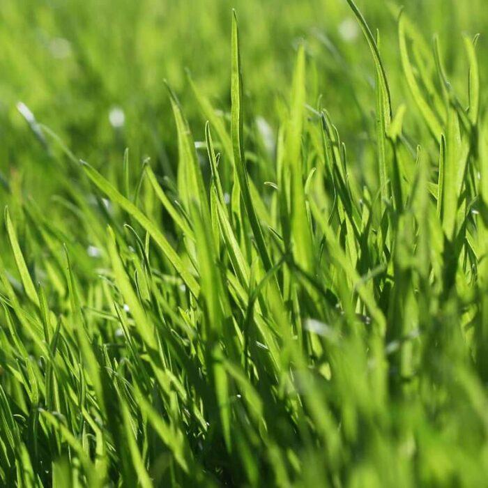 Rasenpflege mit Bio Rasenkalk und Bio Rasendünger