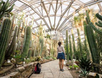 Frau in botanischem Garten umringt von Kakteen
