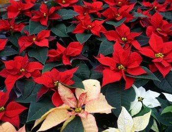 rotes Blütenbeet