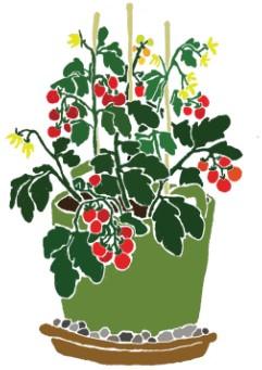 Tomatenpflanze mit roten Tomaten, gelben Blüten im grünen Pflanztopf und Untersetzer