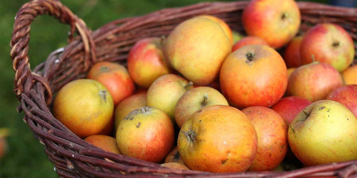Gartenäpfel im Herbst
