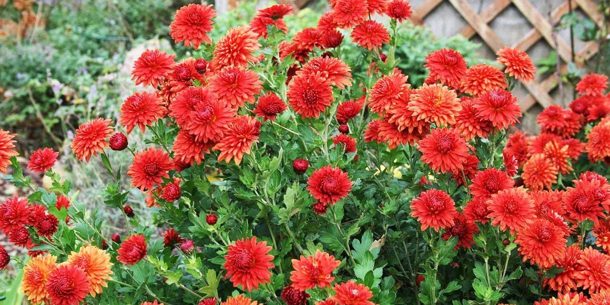 Gartenblumen im Herbst
