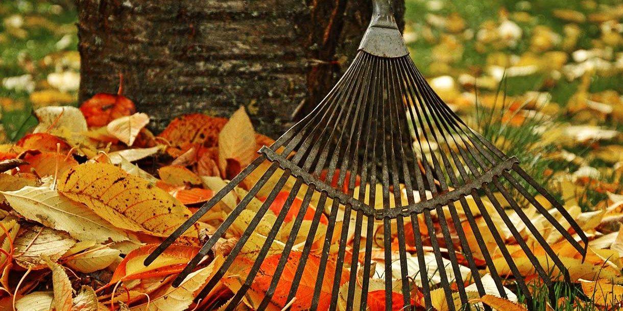 Gartenratgeber für den Herbst
