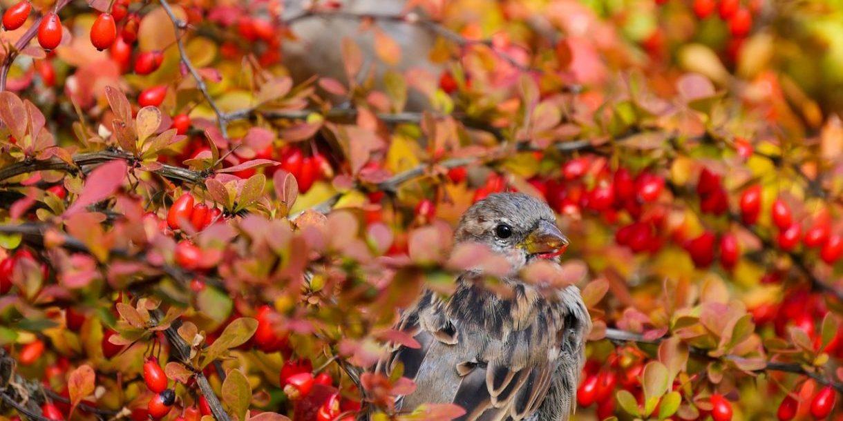 Vögel in einem Baum