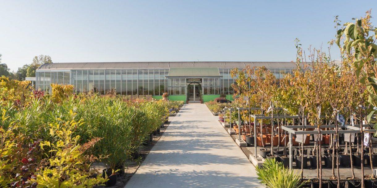 shrubs-4813685_1280