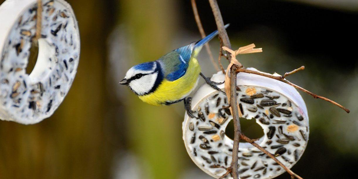 Vogel auf einem Ring aus Vogelfutter